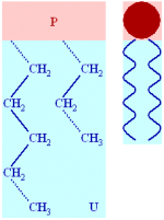 Basic lipid structure