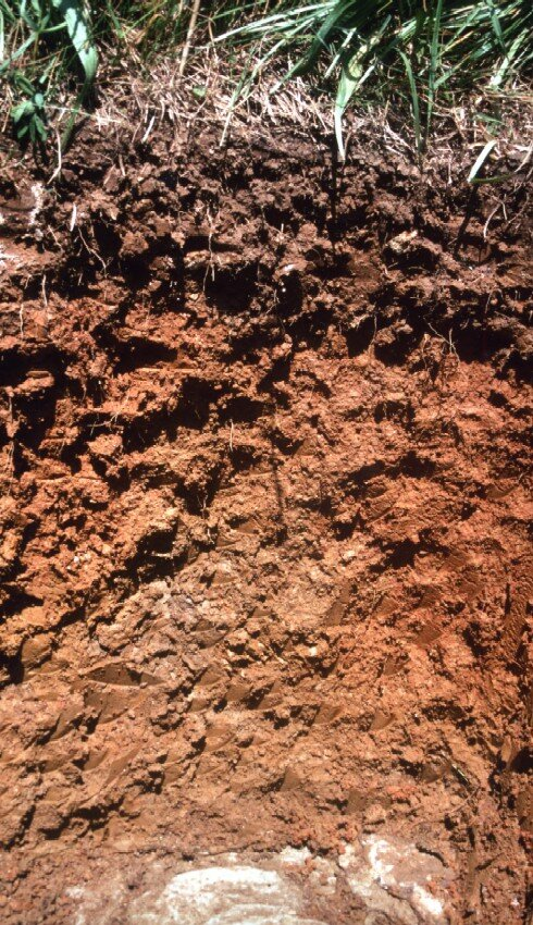 Soil Profile from Tabott county, Tennessee