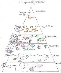 Ecosystem Pyramid student work The study of ecology has many layers
