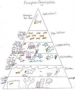 Ecosystem Pyramid student work